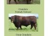 bulls-used